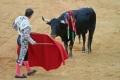 De stier en haar publiek