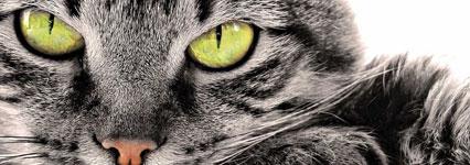 De kat en zijn automatische vuller